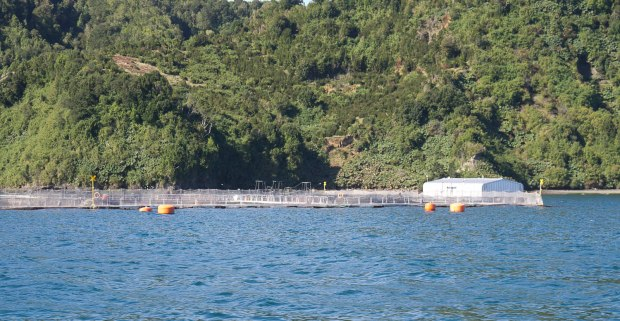 a salmon farm located off the coast of Puerto Montt