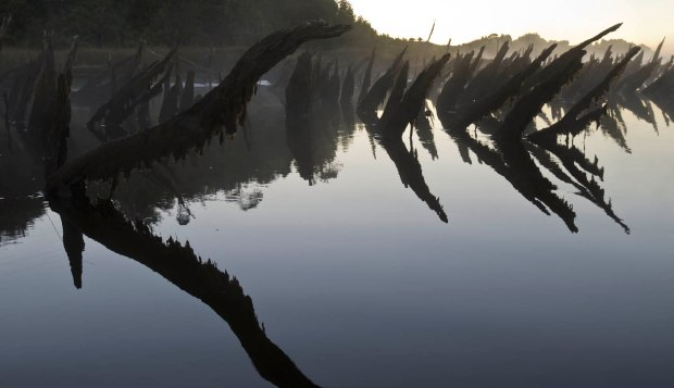 bizarre reflections of dead trees