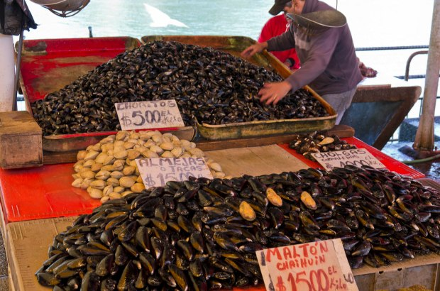 delicious shellfish for sale