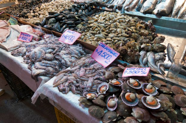 while the mercado central is very touristy, the seafood is very fresh and available for purchase