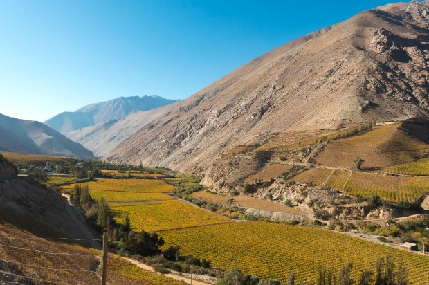 Pisco Elqui, Chile's Pisco growing capital