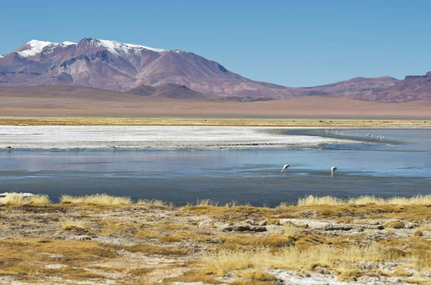 more of the Salar de Tara
