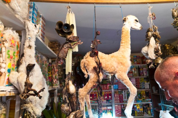 Llama fetus for sale (good luck getting the big ones through customs!)