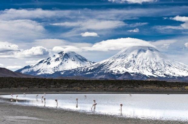flamingos at Parque Nacional Lauca in northern Chile