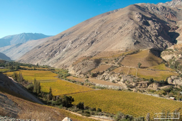 the amazingly fertile Elqui valley