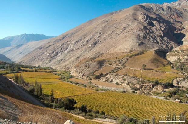 the amazingly fertile Elqui valley