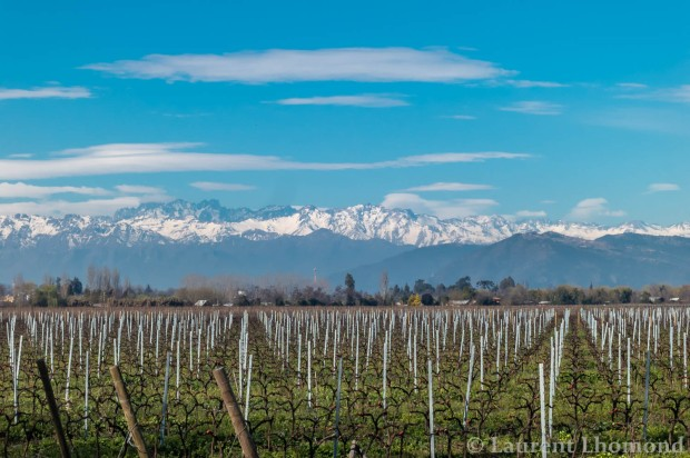 the Colchagua wine valley with the perfect Andes mountain backdrop